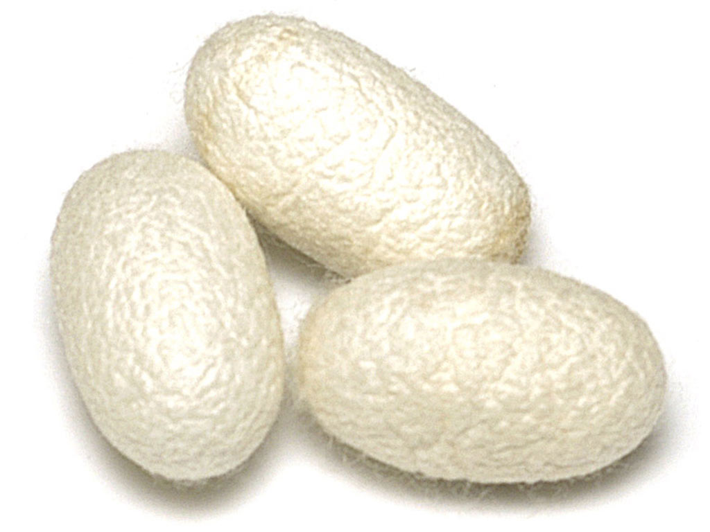 Silk cocoon images galleries with a bite for What do we use silk for